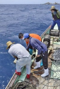サンゴ採取